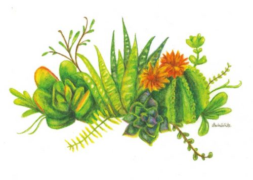 Cactus Patch with Flowers