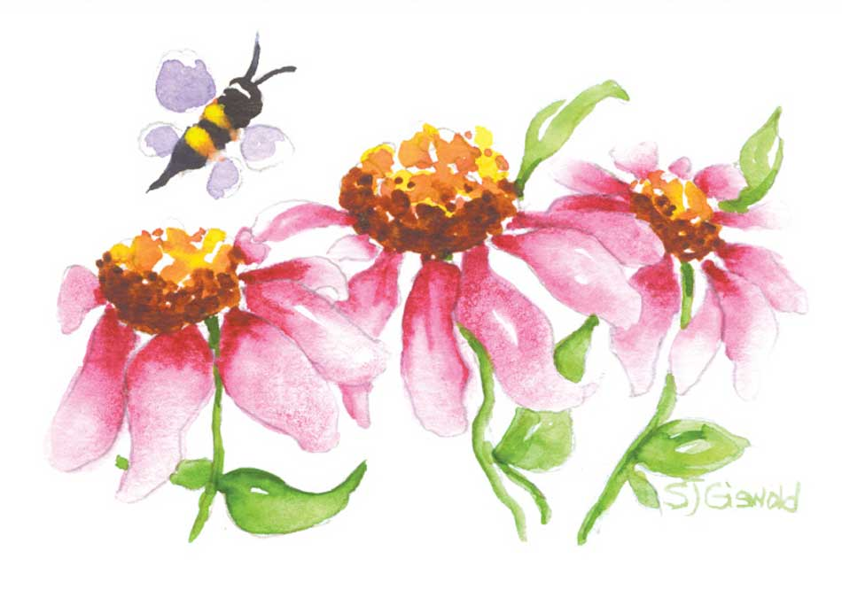 Three Pink Flowers with a Bee flying nearby